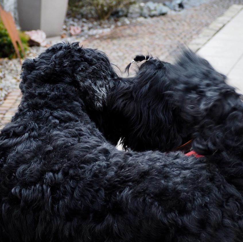 Mighty bekommt von Yascha ein Küsschen !