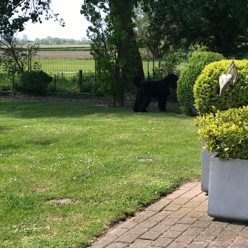 Dalina , allein im Garten !
