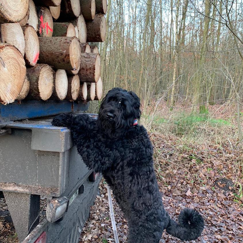 Dalina braucht noch Brennholz ....!