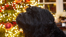 Weihnachtsimpressionen ....!!!!!