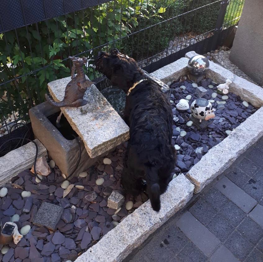 Er entdeckt viel Neues im Garten !