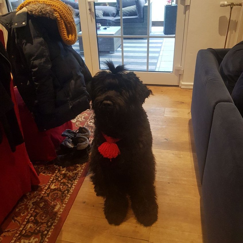 Rufus sitzt auch ganz brav !