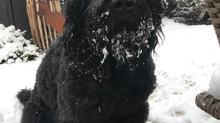 Ben und Mighty hatten Schnee !