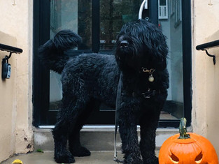 Happy Halloween  Bolshoi !