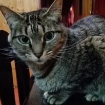 Tarita (adoptada).jpg