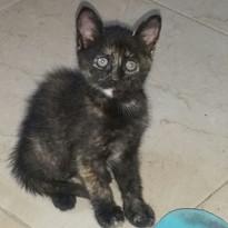 Pulguita (adoptada).jpg