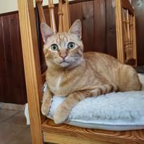 Leo (adoptado).jpg