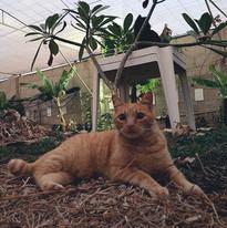 Gustavo (adoptado)