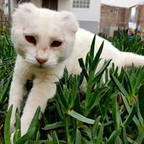 Rosita (adoptada).jpg