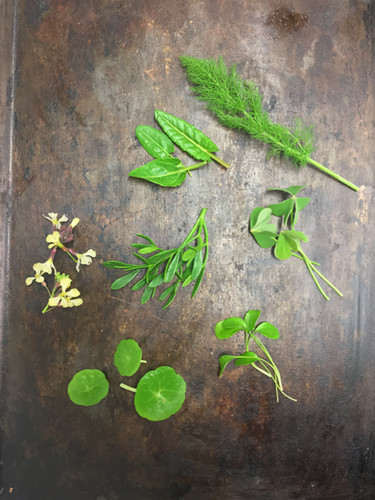 Herbes sauvages
