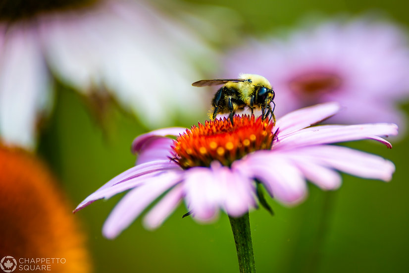 Busy Bee 2