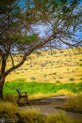Hawaii bench