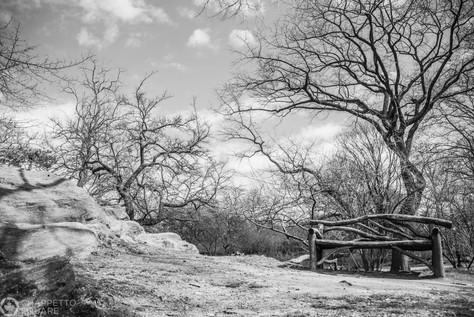 central park in spring-177.jpg