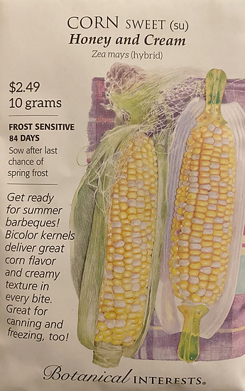 Botanical Interests - Corn Sweet (su) Honey and Cream