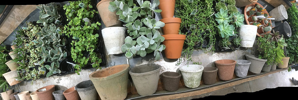 pots and succulents wide shot.jpg