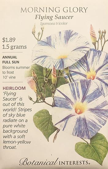 Botanical Interests - Morning Glory Flying Saucer