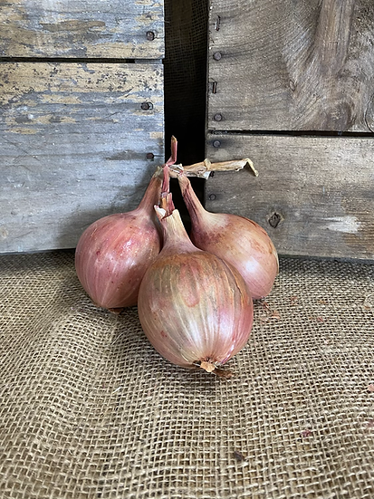 Edgewater Farm Shallots - 1 Pound Bag
