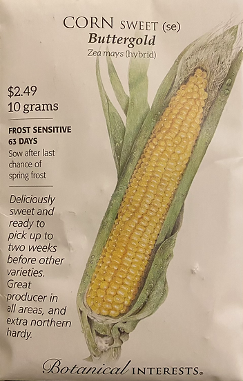 Botanical Interests - Corn Sweet (se) Buttergold