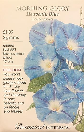 Botanical Interests - Morning Glory Heavenly Blue