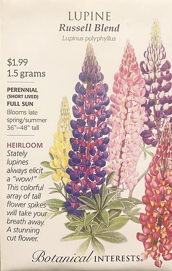 Botanical Interests - Lupine Russell Blend