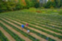 SLF2019Bloch Fall strawberries2 00021web