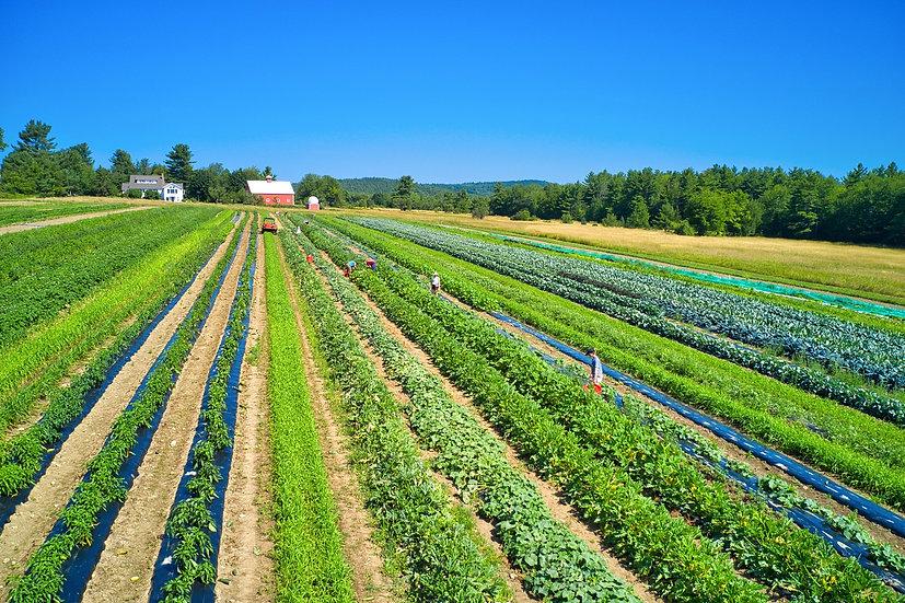 2021 Fruit & Vegetable CSA
