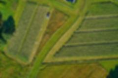 SLF2019Bloch 00003 Tomie field 2 web.jpg
