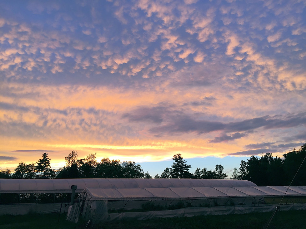 sunset greenhouses.jpg