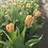 Thumbnail: 2021 Spring Tulip CSA