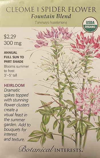 Botanical Interests - Cleome Spider Flower Fountain Blend