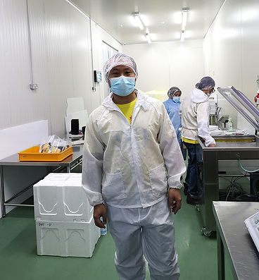 durian pulp extraction in clean room