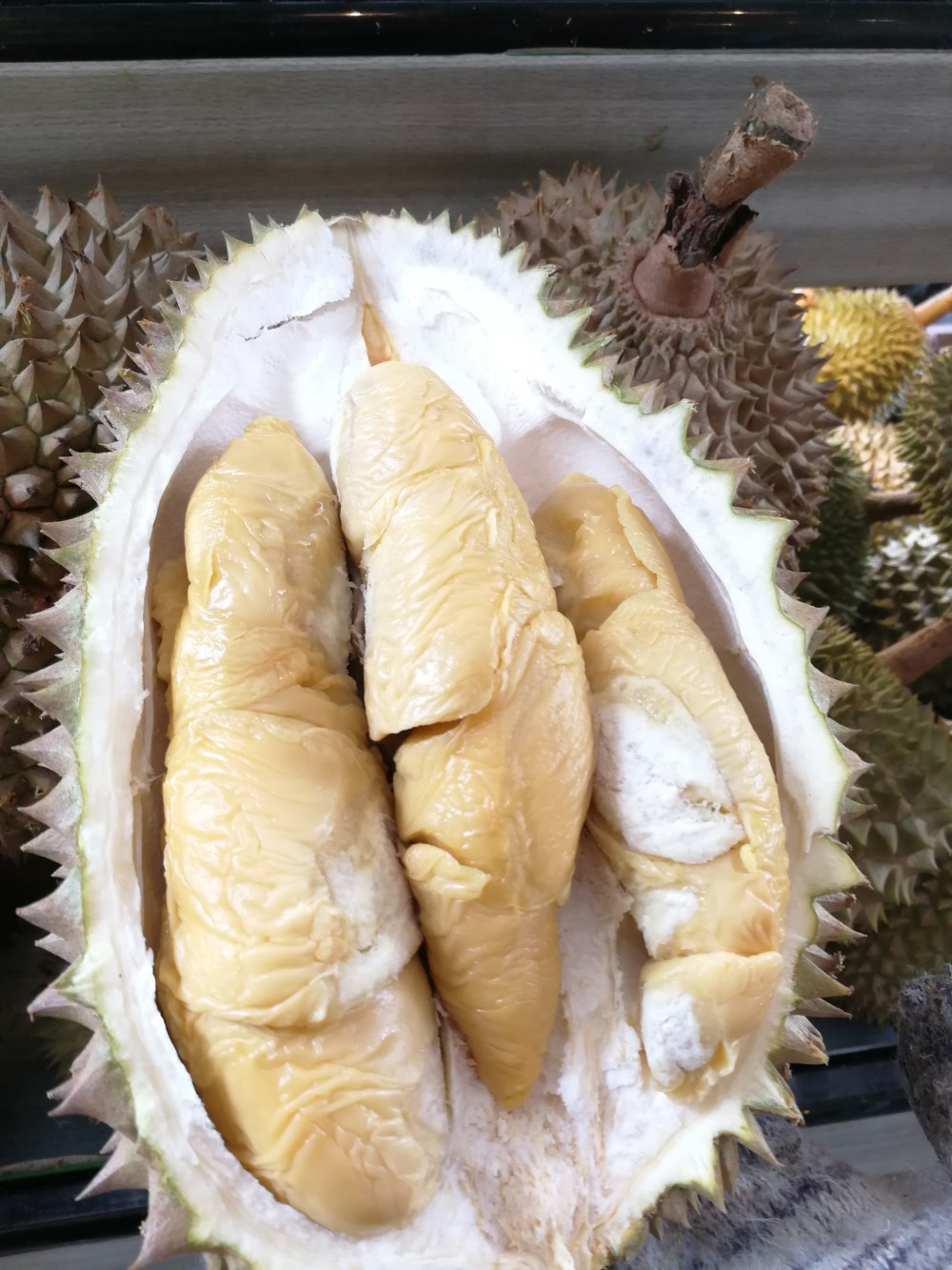 Tekka Durian D160