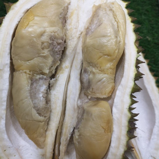 Black Pearl Durian
