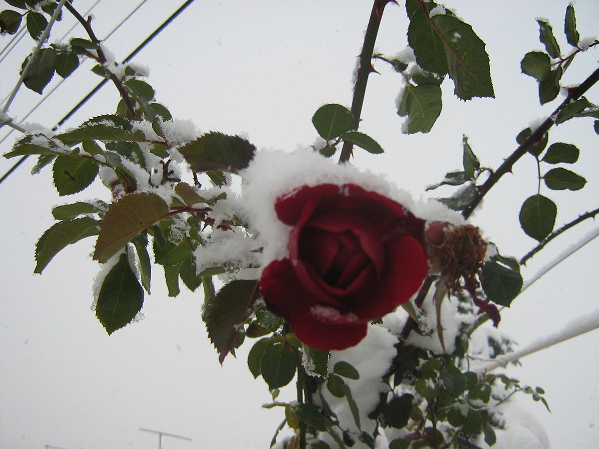 Dodavanje snega