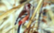 佐倉の野鳥