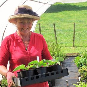 Ayrlies Garden Plant Fair