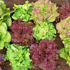 Lettuce patchwork quilt