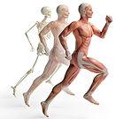male-anatomy-running-455043579_1817x1654