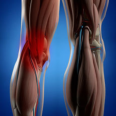 Human-anatomy.-Back-of-legs,-calf-muscle