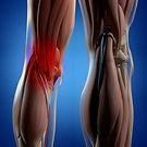 Human-anatomy.-Back-of-legs,-calf-muscle