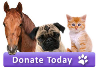 Donate-Today-button.jpg