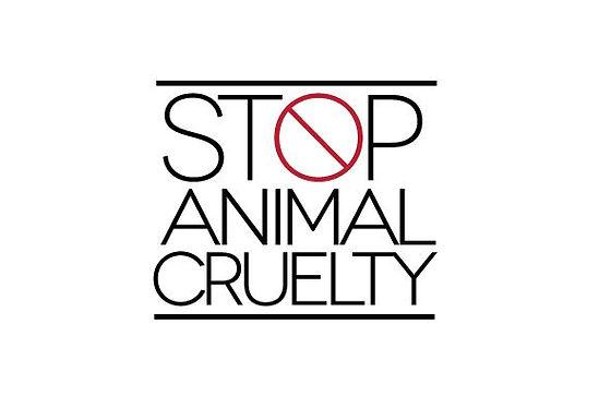 stop animal cruelty.jfif