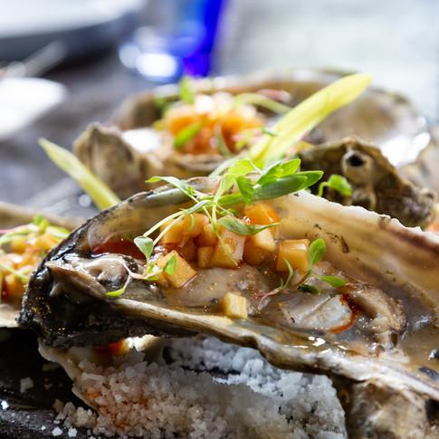 Oysters Ana Zaha