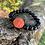 Thumbnail: Gaia