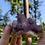 Thumbnail: Cactus Amethyst Quartz