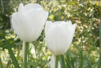 biokiskertem-jutka-mama-tulipan2_edited