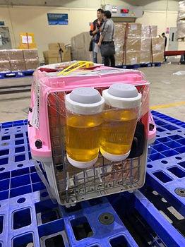 Shipping a teacup Pomerania