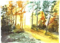 forest (sunup)crop.jpg