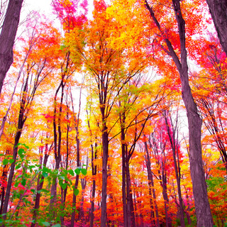 Fall Walk2