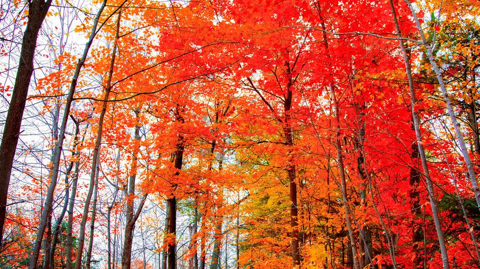 Fall Walk